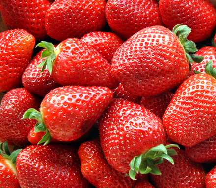 Strawberry Cultivation